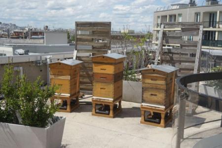 4 raisons de se mettre à l'apiculture