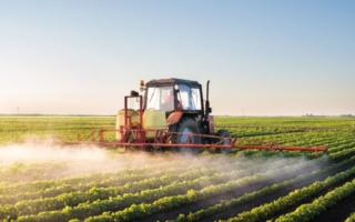 Impact des pesticides sur les abeilles