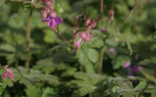 Des gestes simples pour sauver les abeilles