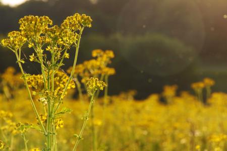 Avec le printemps arrive la reprise des activités de la ruche !