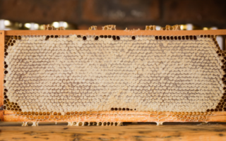 Le miel dans toute sa splendeur !