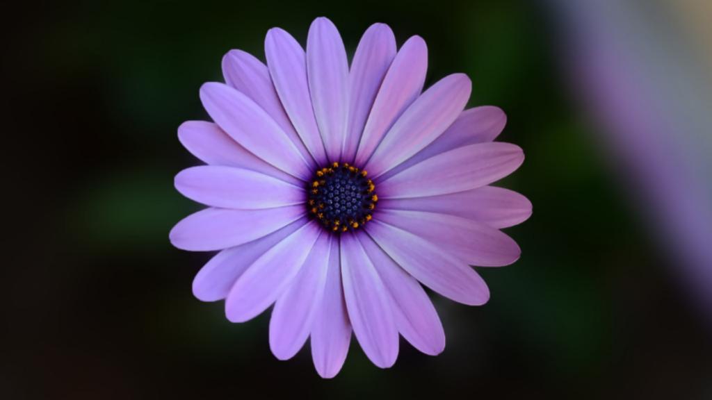 la pollinisation, qu'est ce qu'est la pollinisation