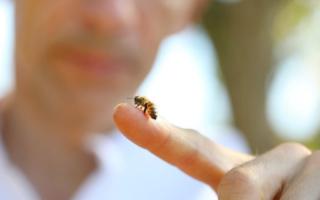 Comment aider les abeilles même en confinement