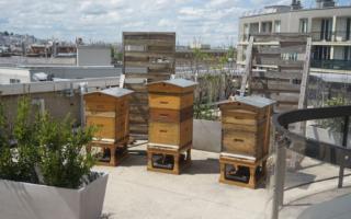 Trop de ruches à Paris et maintenant on fait quoi ?