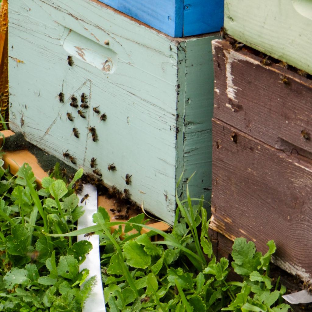 Peinture des ruches : recette peinture naturelle