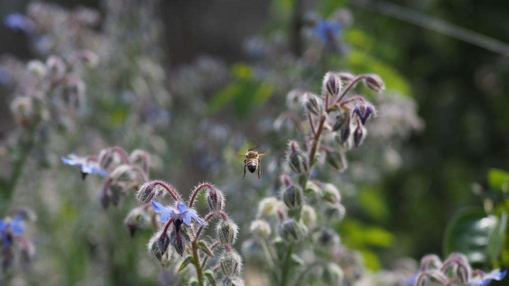 Journée mondiale de l'abeille, abeille en vol